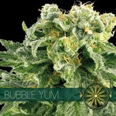 Bubble Yum (Vision Seeds) feminized