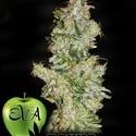 Nexus (Eva Seeds) gefeminiseerd