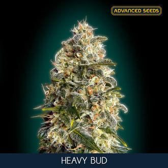 Heavy Bud (Advanced Seeds) feminized