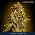 Somango Widow (Advanced Seeds) feminized