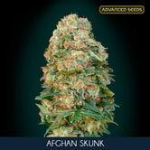 Afghan Skunk (Advanced Seeds) feminized