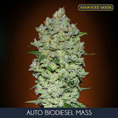 Auto Bio Diesel Mass (Advanced Seeds) feminized