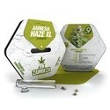 Amnesia Haze XL (Zambeza) feminized