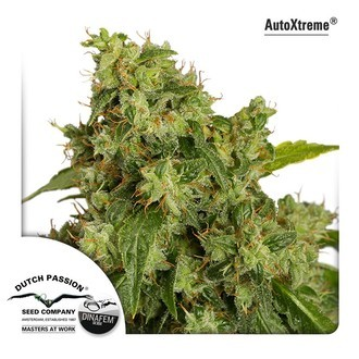 Auto Xtreme (Dutch Passion) gefeminiseerd