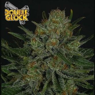 Double Glock (Ripper Seeds) feminized