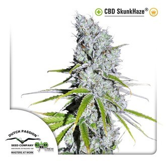 CBD Skunk Haze (Dutch Passion) feminized