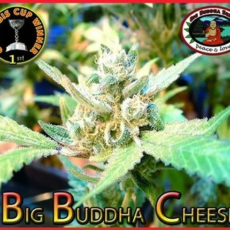 Big Buddha Cheese  (Big Buddha Seeds) feminized