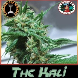 The Kali (Big Buddha Seeds) feminized