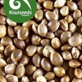 Indoor Mix (Kiwi Seeds) feminized