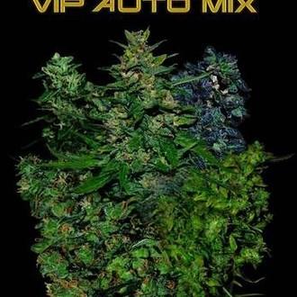 VIP Auto Mix (VIP Seeds) feminized