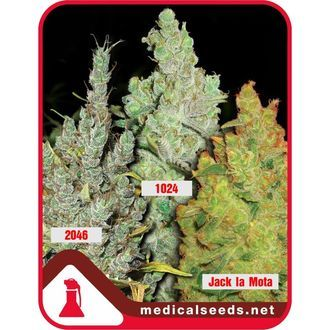 Collection 2 (Medical Seeds) feminized