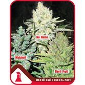 Collection 4 (Medical Seeds) feminized
