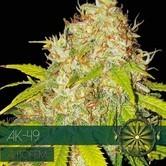 AK-49 Autoflowering (Vision Seeds) feminized