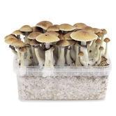 Zamnesia Grow Kit 'B+'