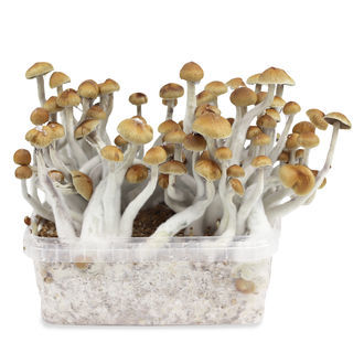 Zamnesia Grow Kit 'Mazatapec'