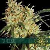 Cheese AKA Gouda's Grass (Vision Seeds) feminized