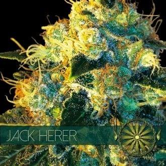 Jack Herer (Vision Seeds) feminized