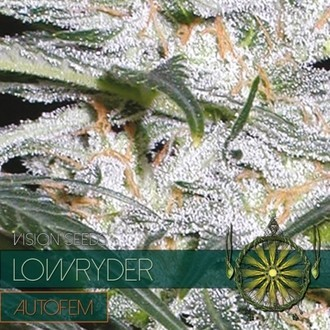 Lowryder (Vision Seeds) feminized