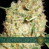 Northern Lights (Vision Seeds) feminized