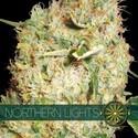 Northern Lights (Vision Seeds) feminized