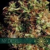 NY Diesel (Vision Seeds) feminized