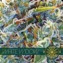 White Widow (Vision Seeds) feminized