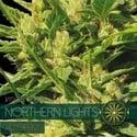Northern Lights Autoflowering (Vision Seeds) feminized