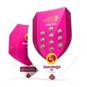 Somango XL (Royal Queen Seeds) feminized