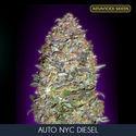 Auto NYC Diesel (Advanced Seeds) feminized
