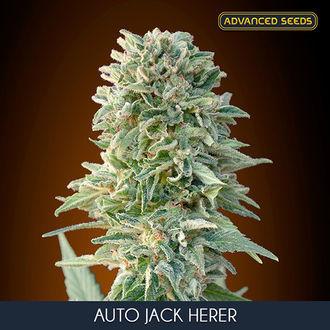 Auto Jack Herer (Advanced Seeds) feminized
