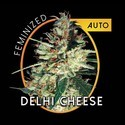 Delhi Cheese Autoflowering (Vision Seeds) feminized