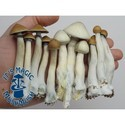 Zamnesia Kweekset Variety Pack ALPHA