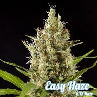Easy Haze (Philosopher Seeds) feminized