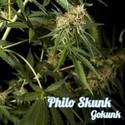 Philo Skunk (Philosopher Seeds) feminized