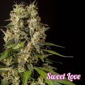 SweetLove (Philosopher Seeds) feminisiert
