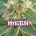 Crystal M.E.T.H. (Dr. Underground) feminized