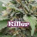 PainKiller (Dr. Underground) feminized