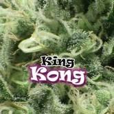 King Kong (Dr. Underground) feminized