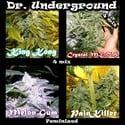Killer Mix (Dr. Underground) feminized