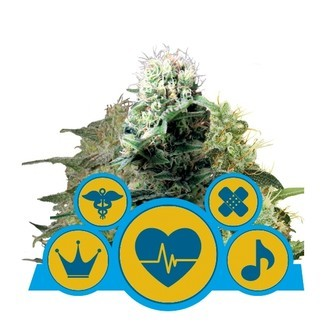 CBD Mix (Royal Queen Seeds) feminized