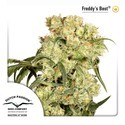 Freddy's Best (Dutch Passion) feminized