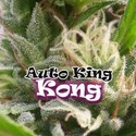 Auto King Kong (Dr. Underground) feminized