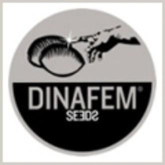Gratis zaadje (Dinafem) feminized