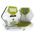 Blueberry Cheese (Zambeza) feminized