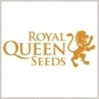 Gratis zaadje (Royal Queen Seeds) Sour Diesel