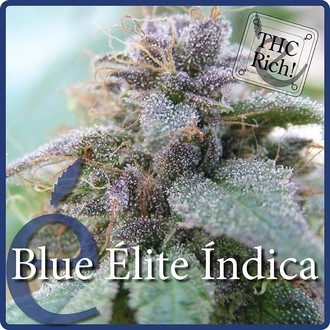 Blue Elite Indica (Elite Seeds) feminized
