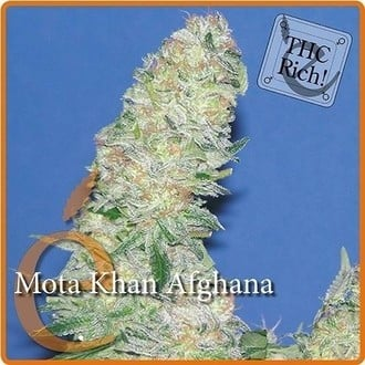 Mota Khan Afghana (Elite Seeds) feminized