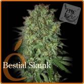 Bestial Skunk (Elite Seeds) feminisiert