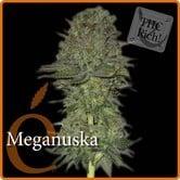 Meganuska (Elite Seeds) feminized