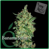 Banana joint (Elite Seeds) feminized
